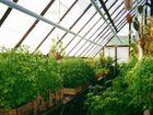 Выращивание зелени в краснодарском крае 29