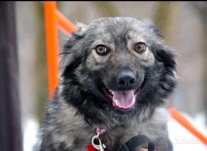 Собака в добрые руки в Москве - фотография № 5