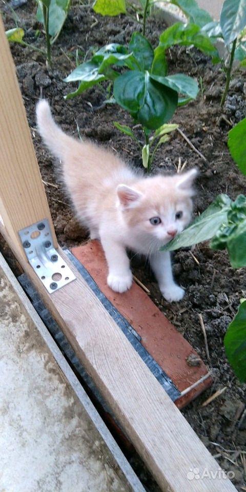 Отдам котят в Анапе - фотография № 3