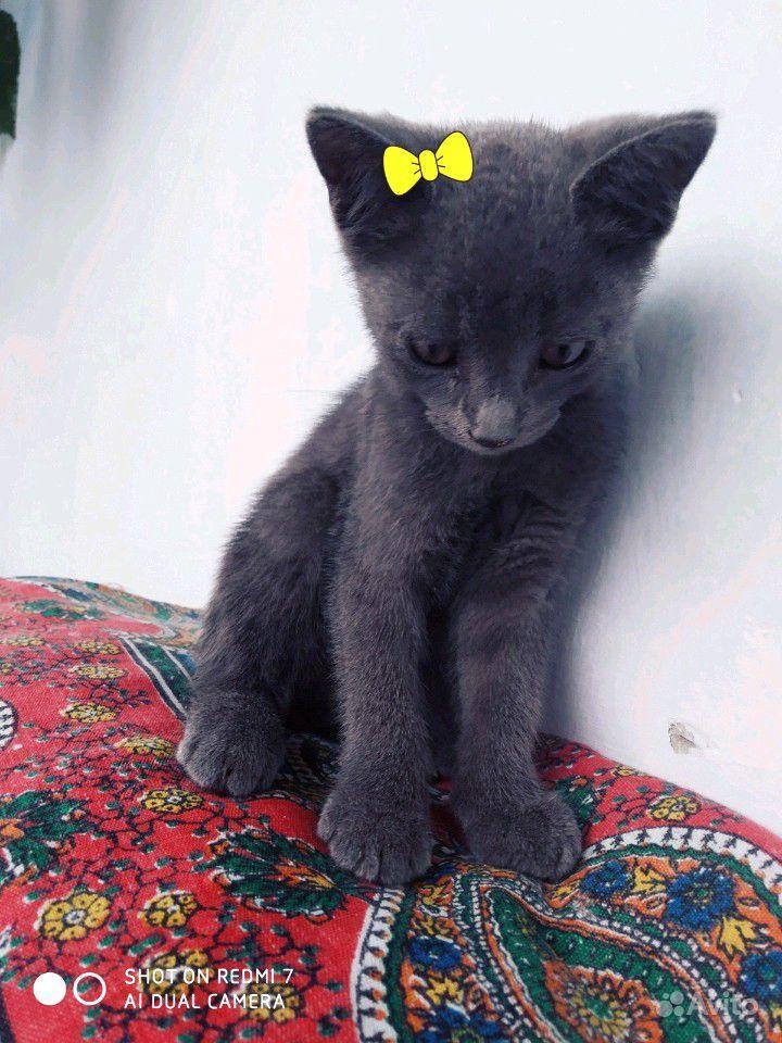 Милая девочка в Махачкале - фотография № 2