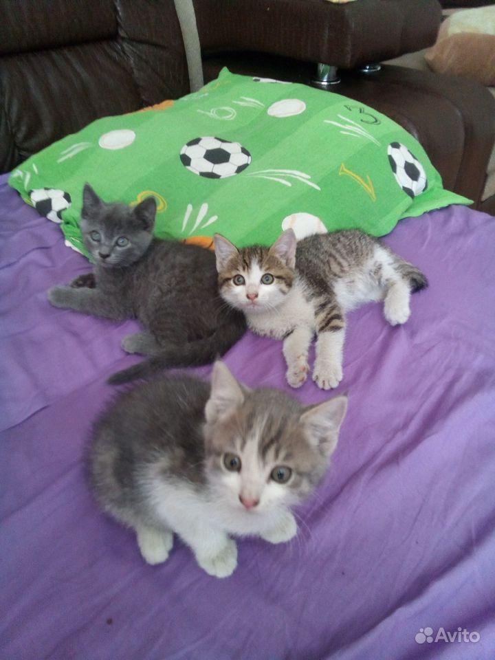 Котятки даром в Улан-Удэ - фотография № 1