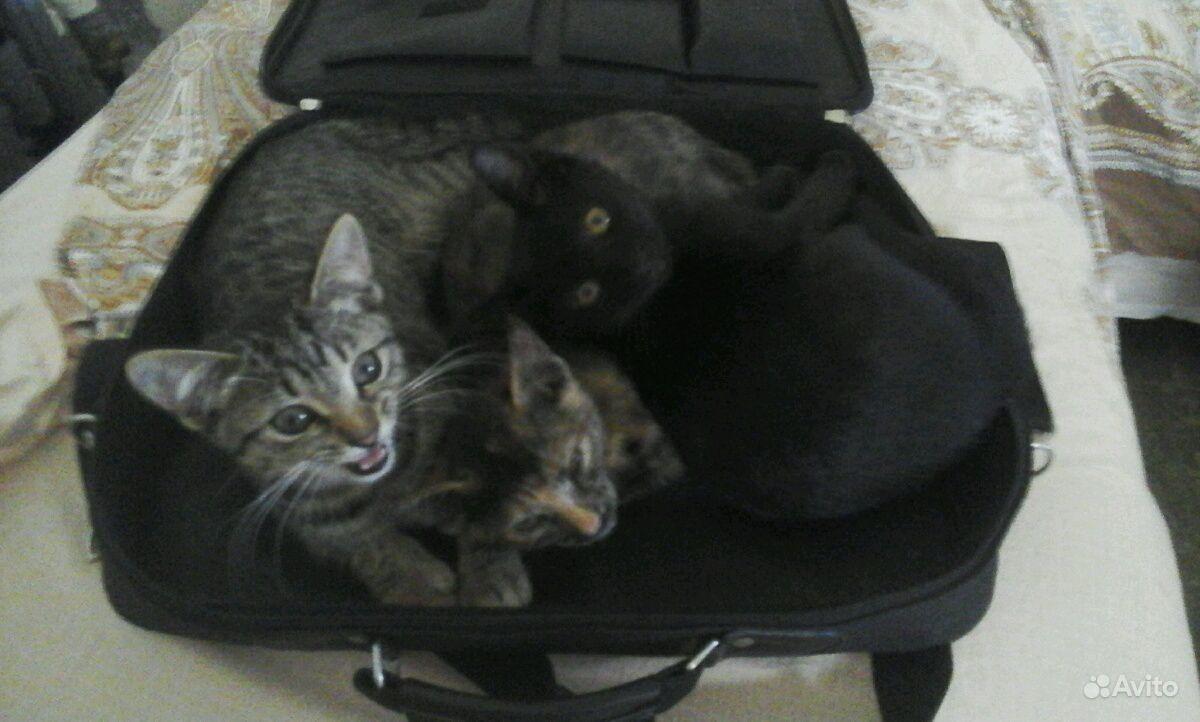 Котята бесплатно, привезу