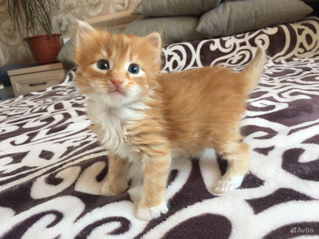 Котёнок, мальчик, 1 месяц, отдадим в добрые руки