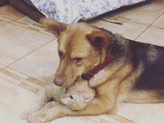 Собака в дар