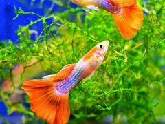 Аквариумные рыбки в ассортименте возможна доставка