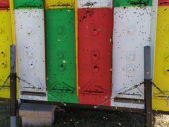 Пчелопавильон