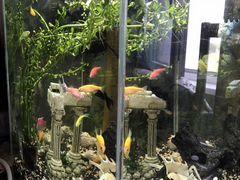 Продам аквариум 30л с рыбками