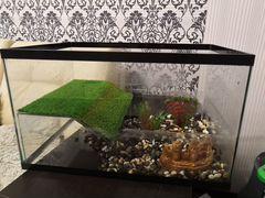 Террариум (аквариум)