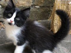 Котёнок мальчик 1,5 мес
