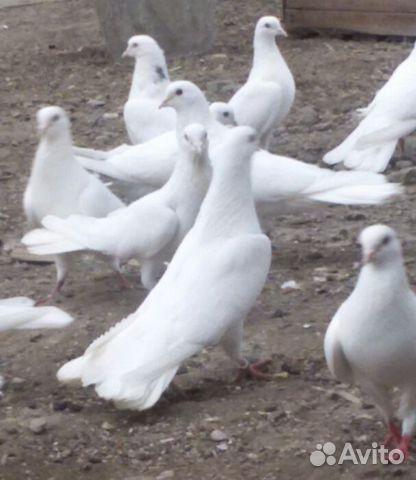 Мраморный голубь Динамо Эконом памятник Волна Пикалево