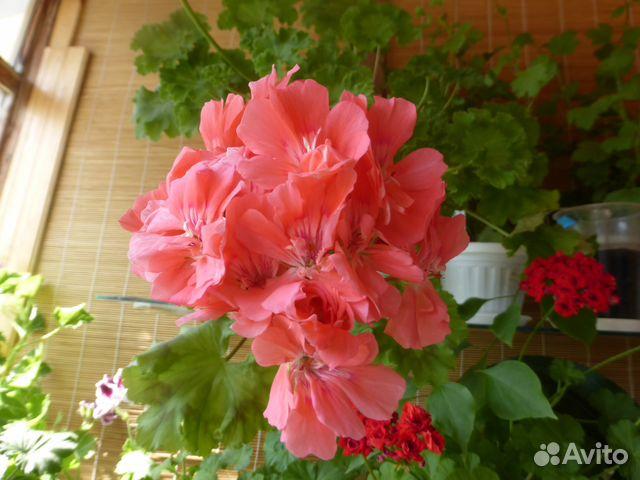 Авито салават цветы