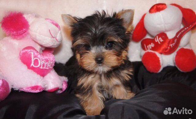 Милые щеночки купить на Зозу.ру - фотография № 1