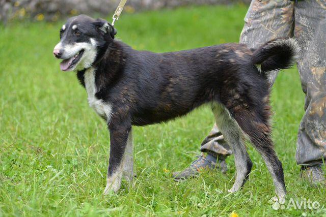 Ляля - собака из приюта с милым носиком купить 3