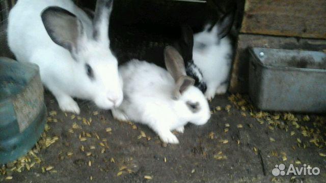 Продам месячных Крольчят.Папа крупный Мама обычная