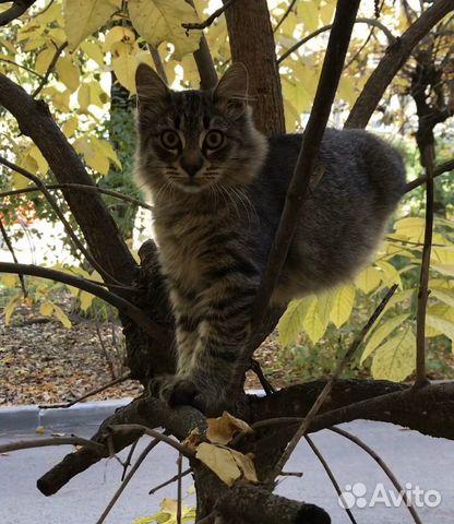 Кошка Рыська в добрые руки / в дар