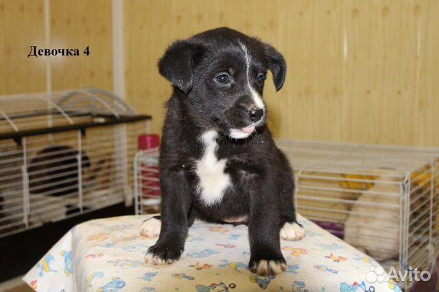 Собака купить на Зозу.ру - фотография № 5