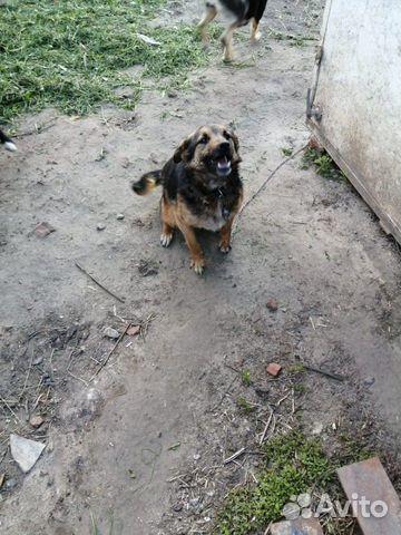 Дара, собака-позитив, стерилизована купить 3