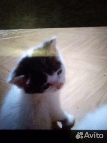 Котята  купить 1