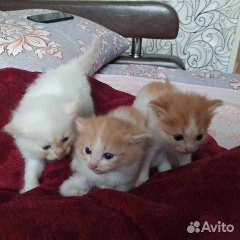 Котенок  89997818867 купить 1