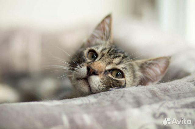 Котенок в добрые руки  89155387202 купить 3