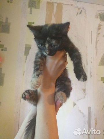 Kitty  89205372110 buy 4