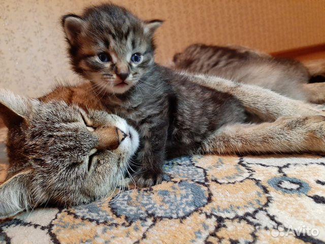 Кошка  89132359715 купить 1