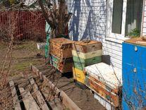 Мед, пчелопакеты