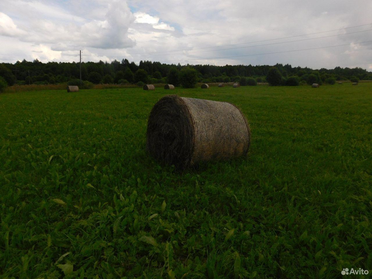 Сено у рожай 2020г в рулонах 250кг