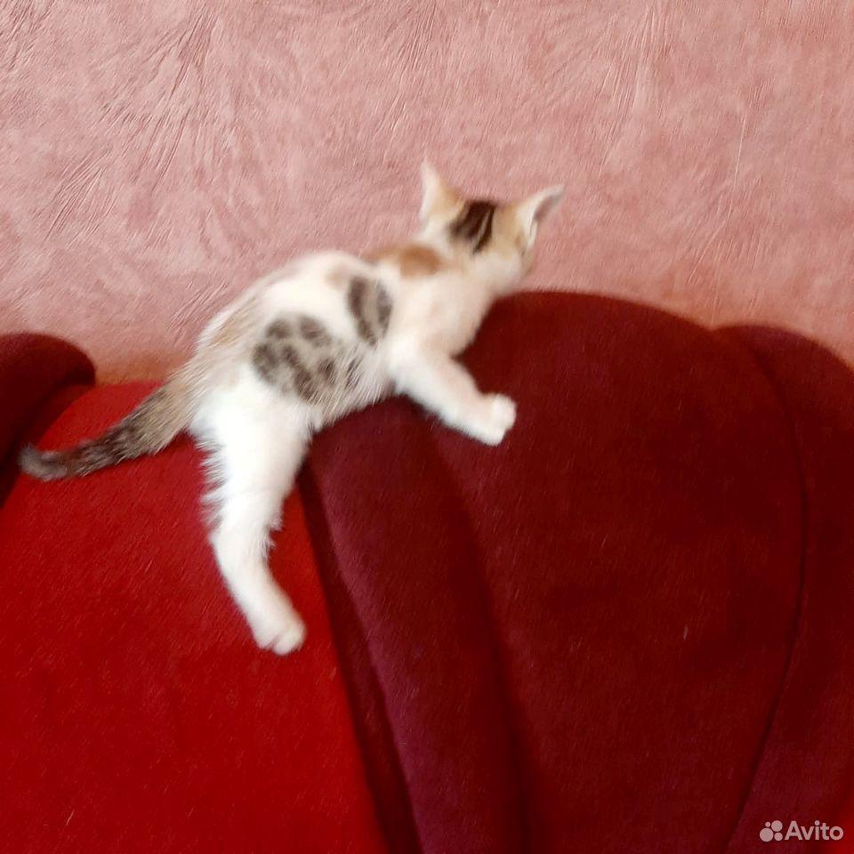 Give kitten in good hands  89379140006 buy 4