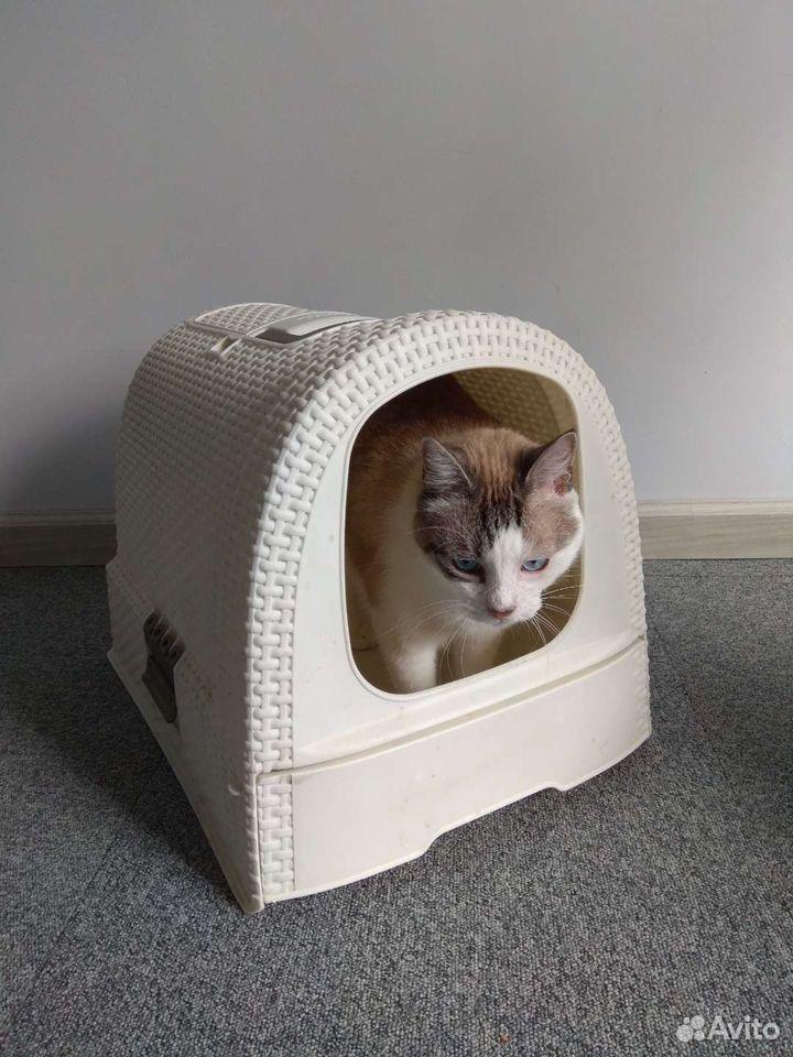 Закрытый туалет для кошек  89114656461 купить 1