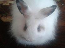 Декоративный ангорский кролик вместе с клеткой
