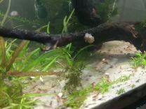 Аквариумные креветки — Аквариум в Геленджике