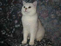 Кот на вязку (BRI ns11)